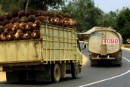 Trucks laden with fresh palm fruit
