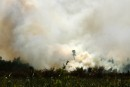 Forest fire to clear land for palm plantation
