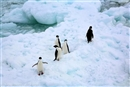 Protecting Antarctica, the heart of the ocean
