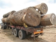 Organised chaos reigns in DRC logging sector
