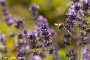 First pan-European field study confirms neonicotinoid pesticides harm bees