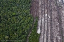 Will Europe lead the way towards 'zero deforestation'?