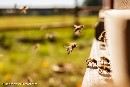Three neonicotinoids down, more bee-killing pesticides to go