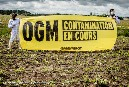 Commission fails to muster support for 3 GMOs