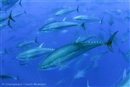 Tuna: The quick species guide