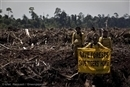 APP is on the attack but still won't abandon rainforest destruction
