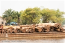 Illegal logging: Fuelling conflict and damaging livelihoods
