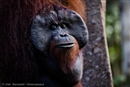 An orang-utan graveyard, Wilmar, and the addiction to dirty palm oil