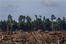 Overwhelming evidence of APRIL's forest destruction in Indonesia