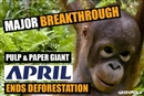 APRIL, pulp and paper giant ends its deforestation