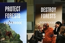 Half a million reasons for P&G to protect forests!