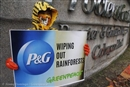 "P&G gets a timely reminder: destroying forests is not ""sustainable"""