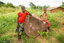 Caught up in the battle against Congo's irresponsible loggers