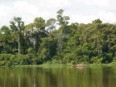 Forest on the banks of the Congo river system