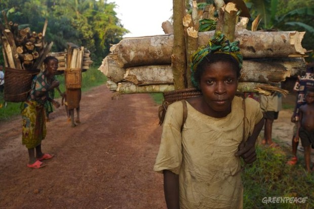 A woman from a forest dependant community gathers firewood. Approximately 40 million people in the DRC depend on the rainforest for their basic needs, such as medicine, food or shelter. Despite being rich in natural resources, the Democratic Republic ...
