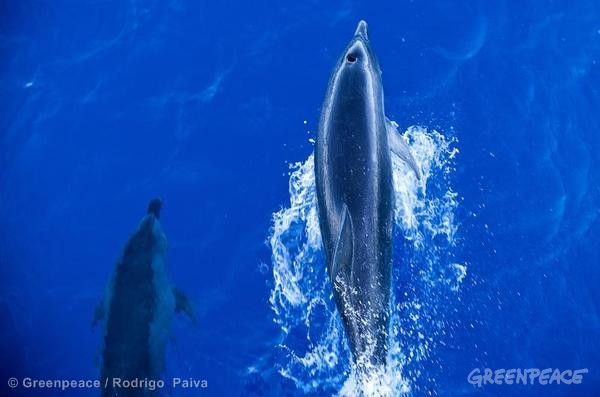 Dolphins in Brazil