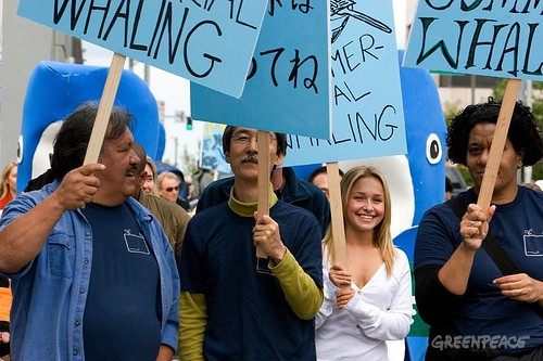 "Hollywood star of ""Heroes"" Hayden Panettiere, of Save the Whales Again Campaign, joins a Greenpeace parade in Anchorage Alaska, as part of a global day of activities with thousands of people, across twenty countries and more than fifty cities to send ..."