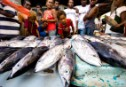 Family members sell skip jack tuna at the
