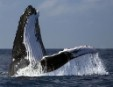 End of Japanese whaling may be in sight