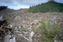 Forest area clearcut by MacMillan Bloedel