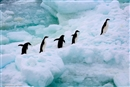 Great news for the Arctic AND the Antarctic!