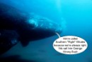 "Southern ""Right"" whales protest George Wrong"