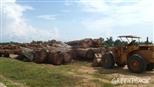 The huge scale of illegal logging in DRC laid bare