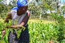 More money and less risk for African eco-farmers