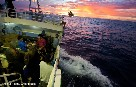 Greenpeace ship busts illegal tuna fishing operation on the Pacific high seas