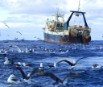 Billion dollar fishing industry on the verge of collapse