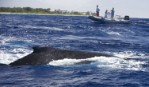 Tracking whales from space