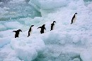 New Zealand in prime position to protect Antarctic waters
