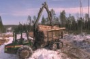 Logging in the Karelian Forest of Russia