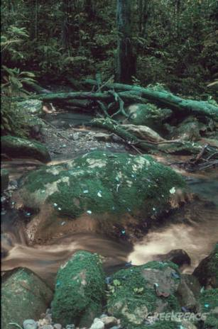 River water flowing over moss covered rocks.