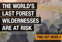 Over 100 million hectares of forest wildernesses are suffering shocking degradation