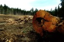 Logging poses a serious threat to Russia's