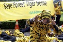 Homeless Tigers Visit Forest Ministry in Jakarta