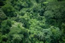Rainforest in Democratic Republic of the Congo.