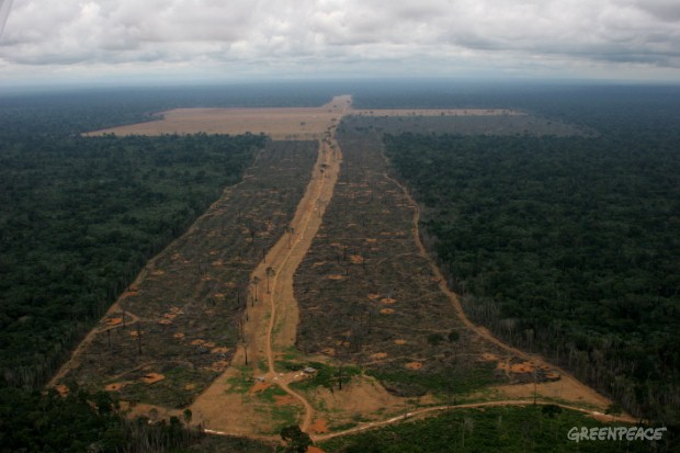 A huge area of 1645 hectares in Gleba do Pacoval, 100km from Santarem, Amazon, illegally logged to clear land for soya plantations.