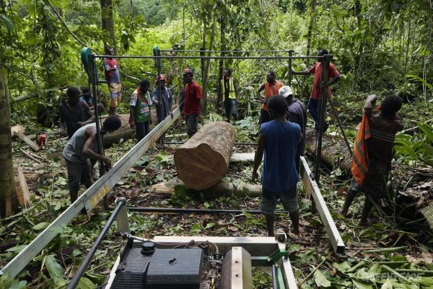 Global Forest Solutions - Community Forest Management in Papua New Guinea.
