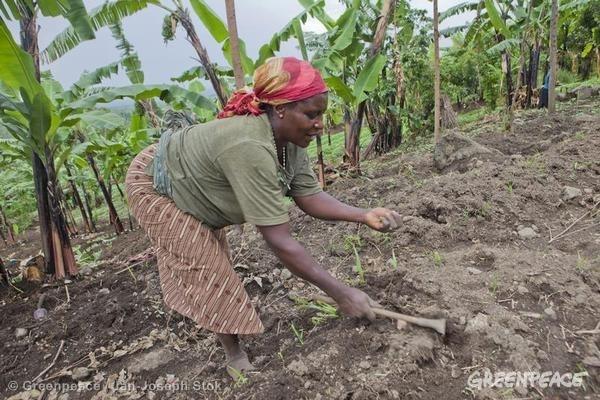 Farmer in DRC