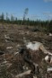 This forest has been clearcut to produce
