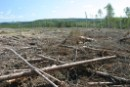 What's left after clearcutting in the Boreal