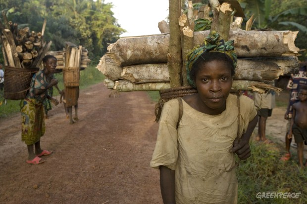 A woman from a forest dependant community gathers firewood.  Beyond environmental impacts, logging in this region exacerbates poverty and leads to social conflicts.