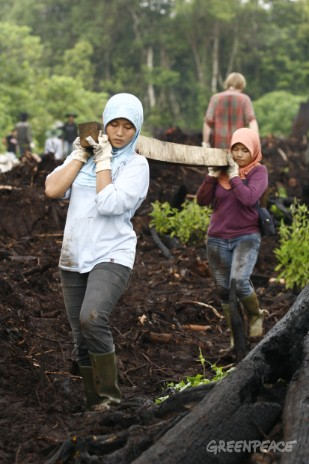 Greenpeace activists work with locals to halt drainage by constructing dams on the peatland canals. This will prevent the peatland from drying out and releasing carbon dioxide, the leading greenhouse gas into the atmosphere.