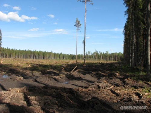 Clearcut forest in Russia. Much of the timber from clearcuts like these are destined for Finland.