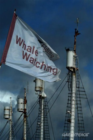 Flags promoting whale watching flying in front of the crow's nests of old whaling ships that are laid-up in Reykjavik harbour. The whaling ships were taken out of service in 1989 but may be part of the new hunt. The whale watching industry fears for i...