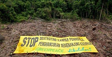 Greenpeace volunteers hold a banner in a deforested area of the Kampar peninsula, Sumatra, Indonesia © Greenpeace/Novis