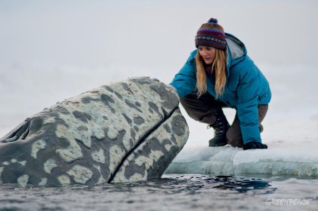 The Film 'Big Miracle'.