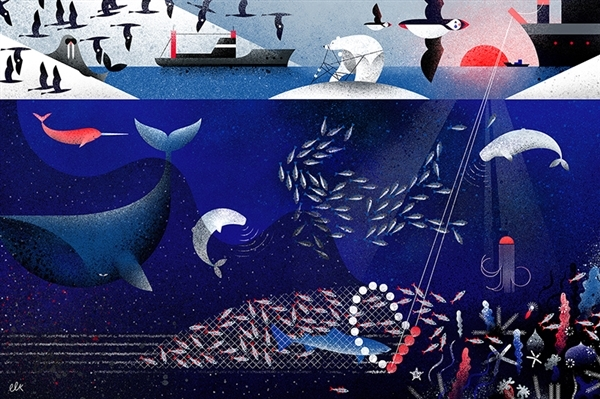 The Arctic is under threat from destructive industrial fishing. Image Credit: Eve Lloyd Knight